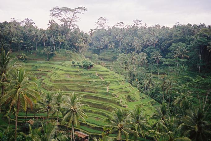 Bali 2015 - 4