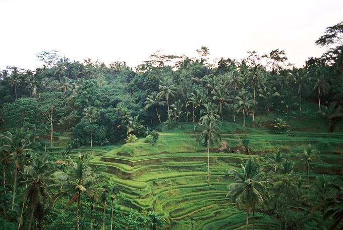Bali 2015 - 5