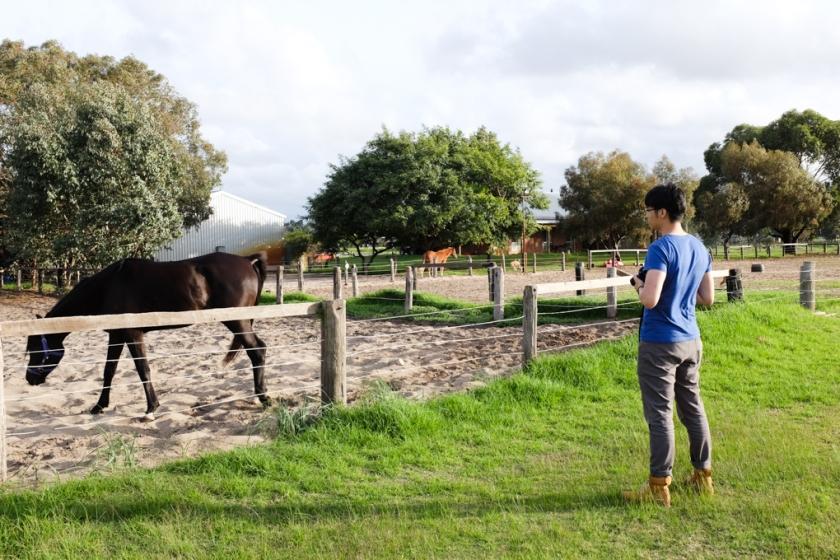 MR - Horse